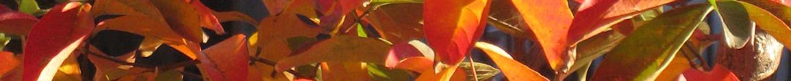 leaf_header